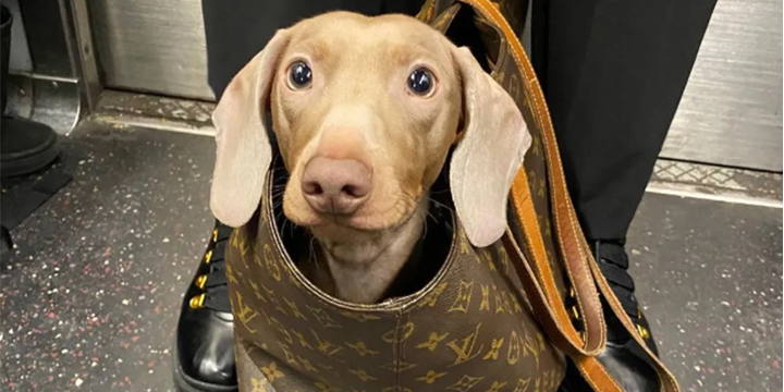 Serendipity | Dogs in bags: slowing down in fast-paced metropolis