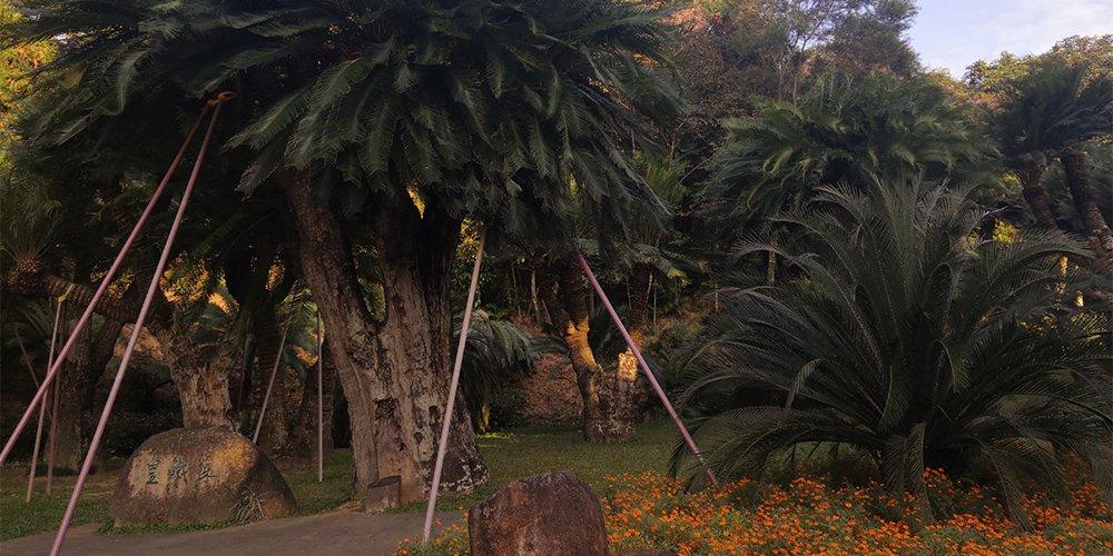 漫遊大灣區|深圳仙湖植物園 8000種植物你識多少?