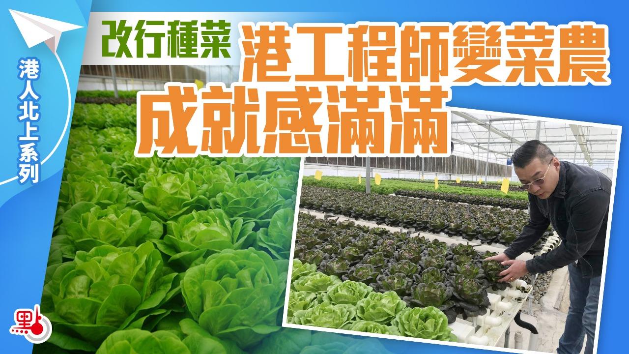 港人北上 | 改行種菜 港工程師變菜農成就感滿滿