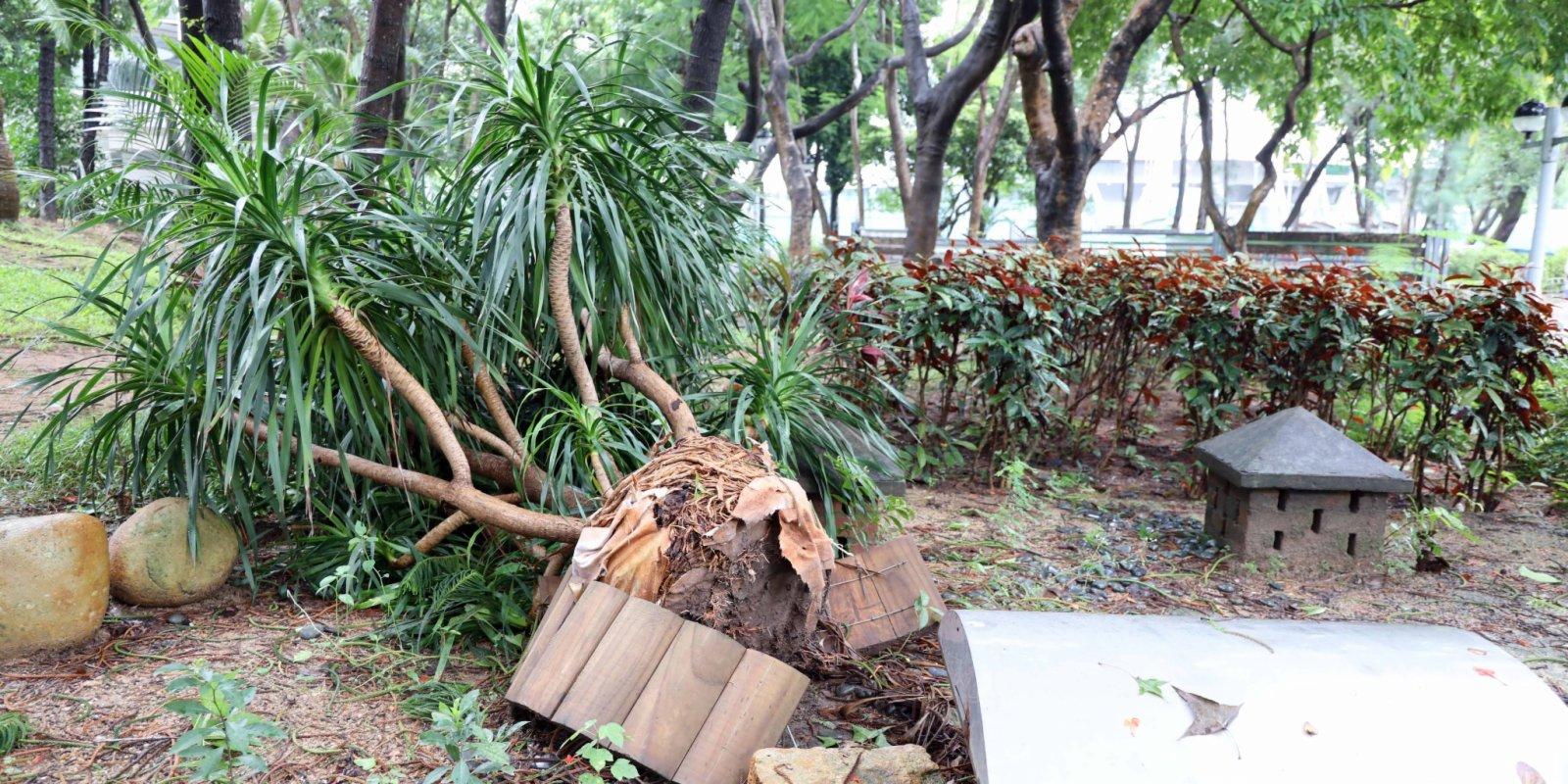 樹殺手「菟絲子」驚現何文田 專家指恐釀塌樹危險