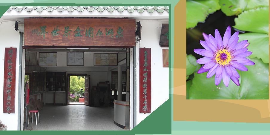 漫遊大灣區|深圳東湖公園盆景世界